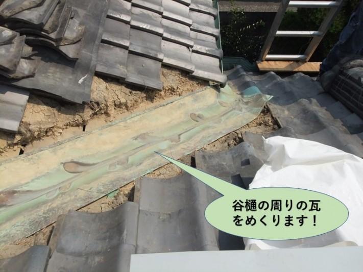 岸和田市の谷樋の周りの瓦をめくります