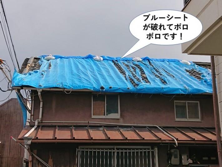 貝塚市の屋根のブルーシートが破れてボ