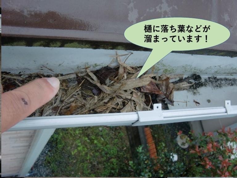 岸和田市の樋に落ち葉などが溜まっています!