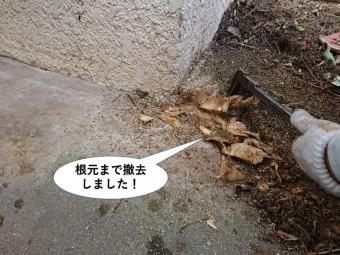 岸和田市で木の根元まで撤去しました