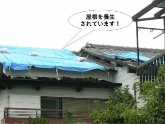 貝塚市の屋根を養生されています