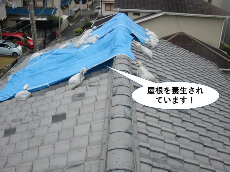 熊取町の屋根を養生されています