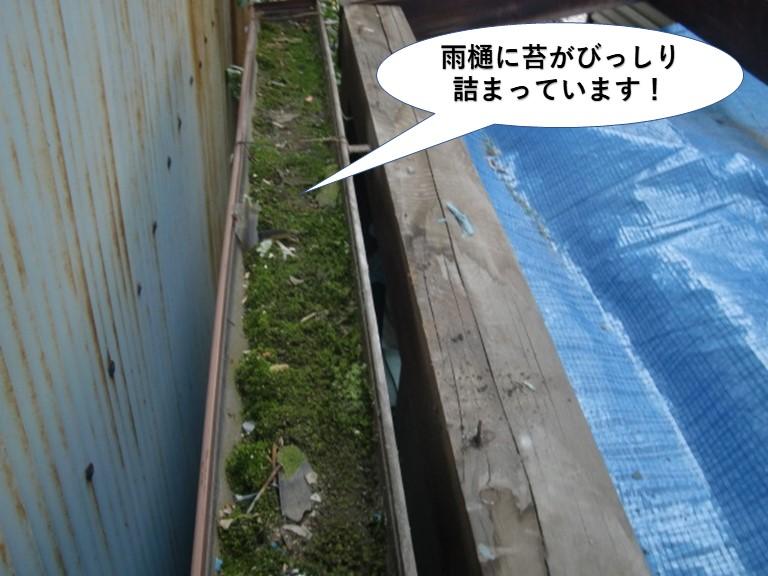 貝塚市のテラスの雨樋に苔がびっしり詰まっています