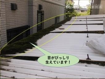岸和田市のカーポートの屋根に苔がびっしり生えています