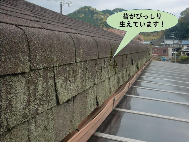 岸和田市のアスファルトシングルに苔がびっしり生えています