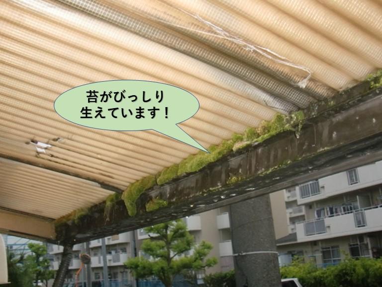 岸和田市のカーポートの屋根苔がびっしり生えています