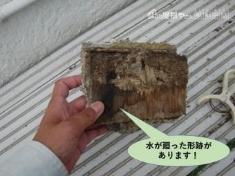 岸和田市の落下した軒天井板に水が廻った形跡があります