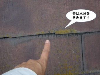 貝塚市の屋根現調で苔は水分を含みます