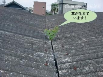 岸和田市の貸しガレージの中樋に草が生えています