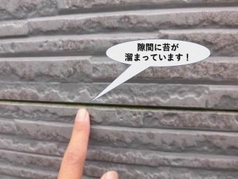 貝塚市の外壁継ぎ目の隙間に苔が溜まっています!