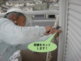 和泉市の雨樋をカットします!