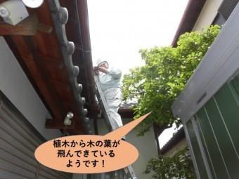 岸和田市で植木から木の葉が飛んできているようです