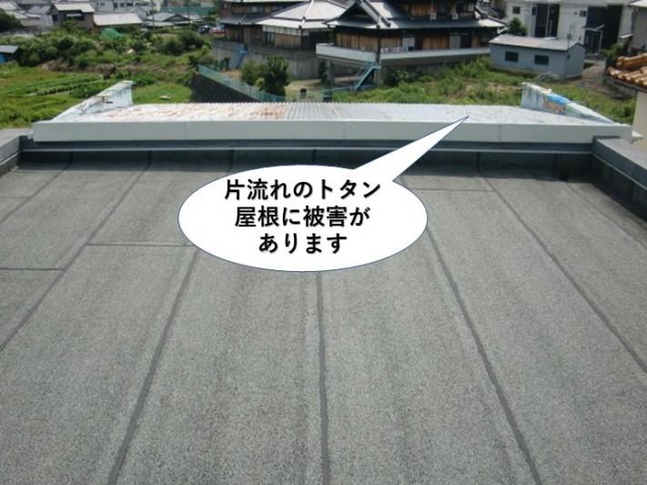 泉佐野市の片流れのトタン屋根に被害があります