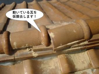 和泉市の動いている瓦を仮撤去します