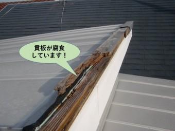 貝塚市の棟の貫板が腐食しています