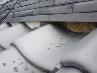 岸和田市土生町の屋根現況で痩せた漆喰の様子