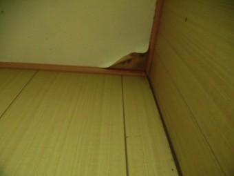 岸和田市下野町のトイレの天井の雨漏り