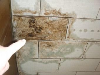 泉大津市の玄関天井の雨漏り