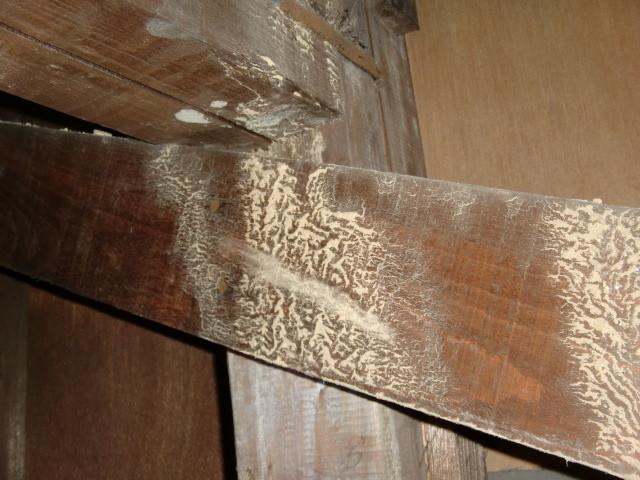 泉北郡忠岡町で屋根裏に雨漏りの形跡あり