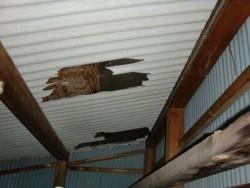 忠岡町の納屋の波型スレートが破損