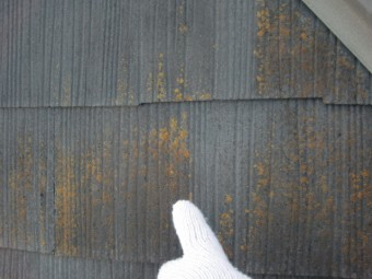 岸和田三田町の屋根に付いた苔