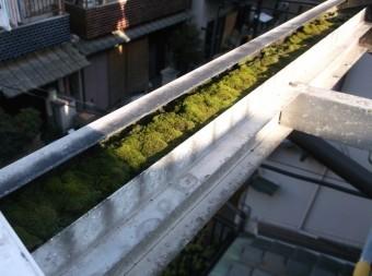 高石市千代田の二階ベランダテラスのフレームに付いた苔