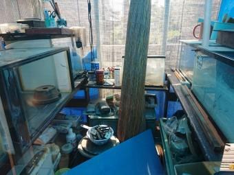 泉佐野市の温室内部