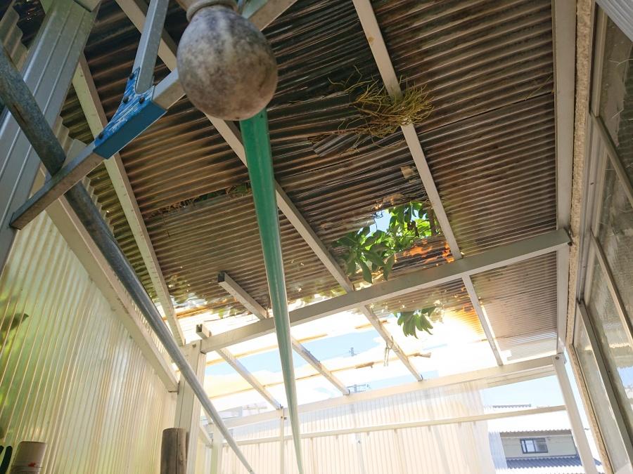 岸和田市の植木の伐採、テラスの波板張替え前