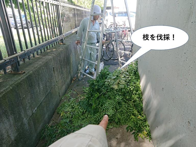 泉大津市の木の枝を伐採