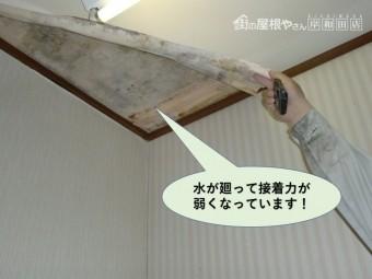 和泉市の天井に水が廻ってクロスの接着力が弱くなっています
