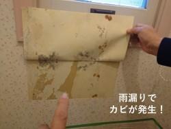 泉南市のトイレの壁に雨漏りでカビが発生