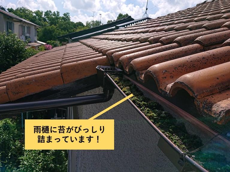 和泉市の雨樋に苔がびっしり詰まっています