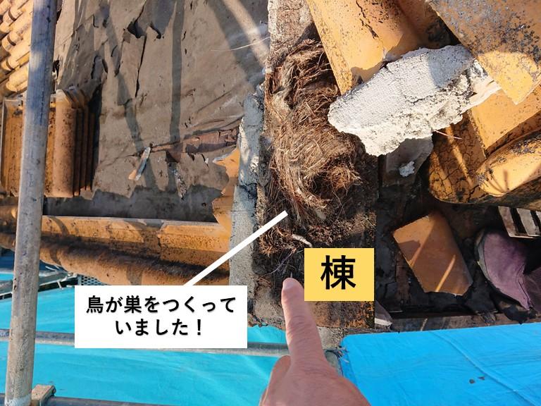 和泉市の棟に鳥が巣をつくっていました!