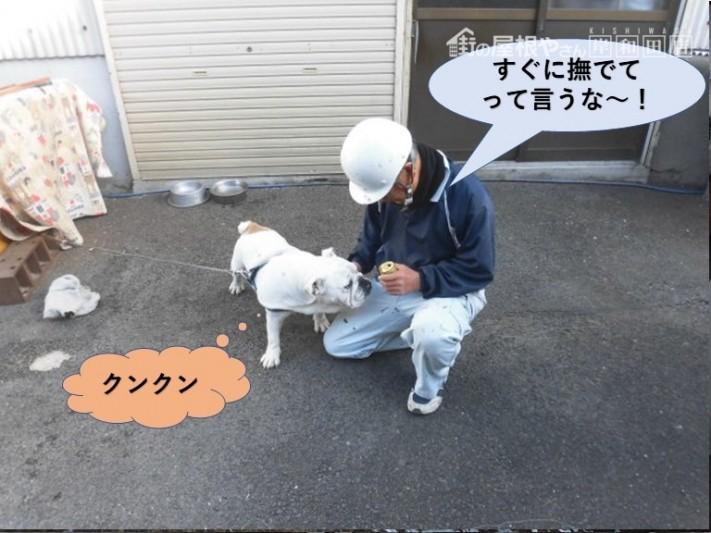 岸和田市の現場で職人と犬が仲良くなりました