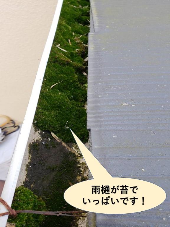 貝塚市の雨樋が苔でいっぱいです