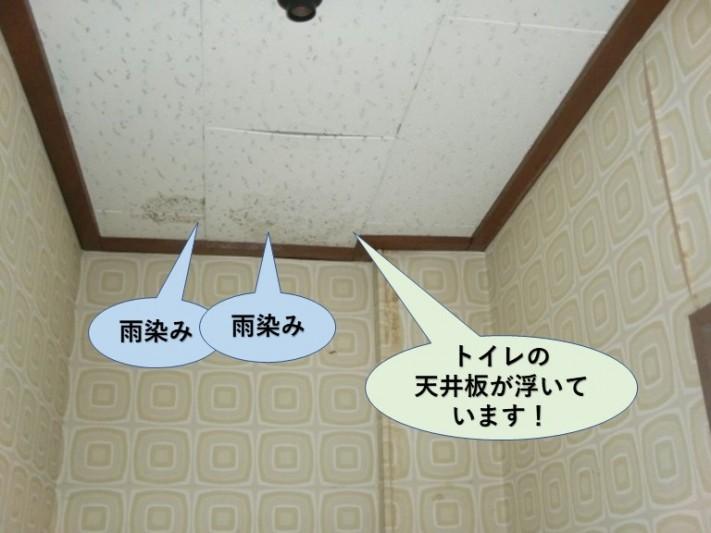 和泉市のトイレの天井板が濡れて浮いています