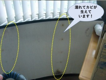 貝塚市のお部屋の壁に雨漏りでカビ発生
