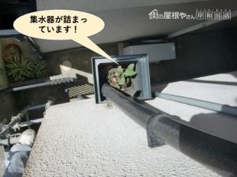 熊取町の集水器が詰まっています