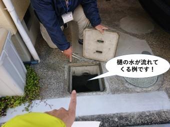 和泉市の雨樋の水が流れてくる桝です