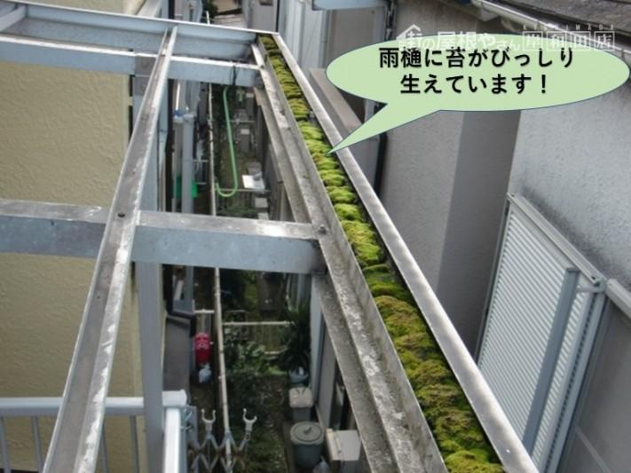 岸和田市のテラス屋根の雨樋に苔が詰まっています