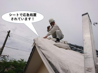 泉佐野市の屋根をシートで応急処置されています