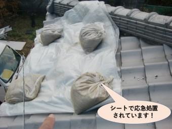 岸和田市の屋根をシートで応急処置されています