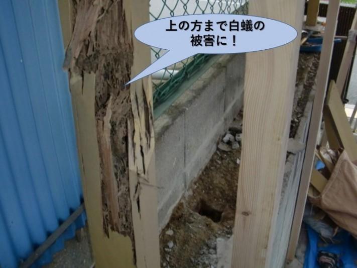 阪南市のカーポートの柱の上の方まで白蟻の被害に!