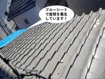 和泉市の大屋根をブルーシートで屋根を養生しています