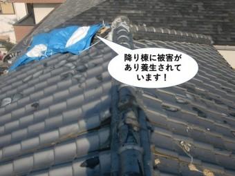 忠岡町の降り棟に被害があり養生されています