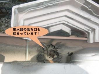 岸和田市の集水器の落ち口も詰まっています
