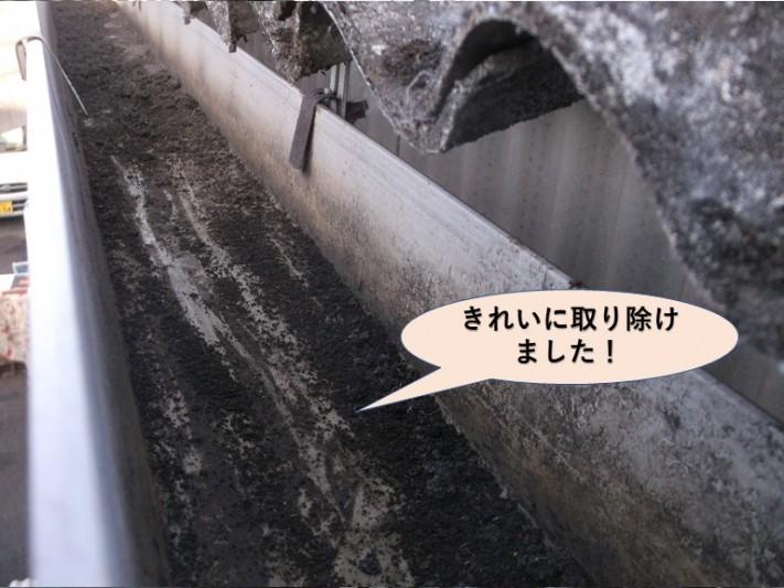 岸和田市の雨樋に詰まっていた雑草をき