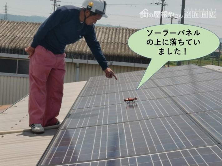 泉佐野市でソーラーパネルの上に落ちています!