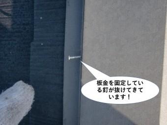 忠岡町の屋根の板金を固定している釘が抜けてきています