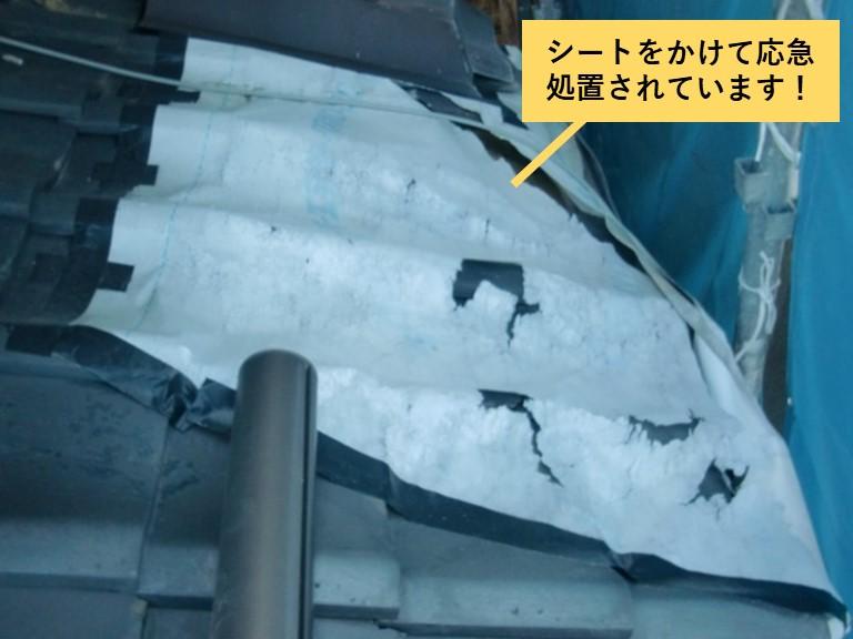 和泉市の下屋を応急処置されています